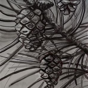 Four Piinecones (watercolor)