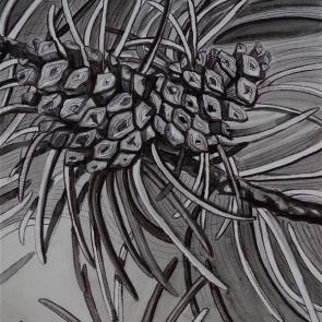 Two Pinecones (watercolor)